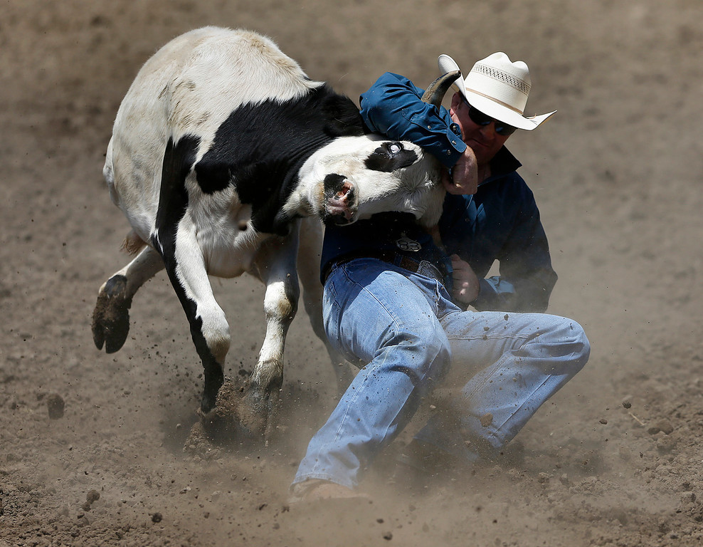 . A steer wrestler competes during the California Rodeo Salinas at the rodeo grounds in Salinas on Thursday July 20, 2017. (David Royal/Herald Correspondent)