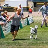 Del Monte Kennel Club