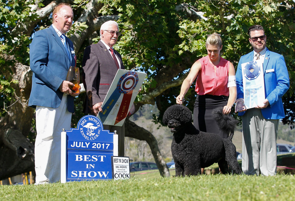 . Manly, a Portuguese water dog and 2016 Best in Show winner, owned by Remy Smith-Lewis and handled by Janice Hayes wins this year\'s Best in Show of the 2017 Del Monte Kennel Club All Breed Shows and Obedience and Rally Trials at Carmel Middle School on Sunday, July 16, 2017 in Carmel, Calif. (Vernon McKnight/Herald Correspondent)
