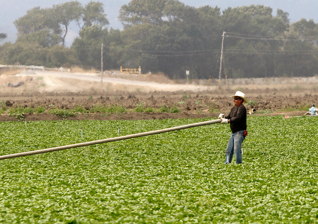 . A farmworker hauls irrigation pipe in a field in north Monterey County on Thursday, July 27, 2017.  (Vern Fisher - Monterey Herald)