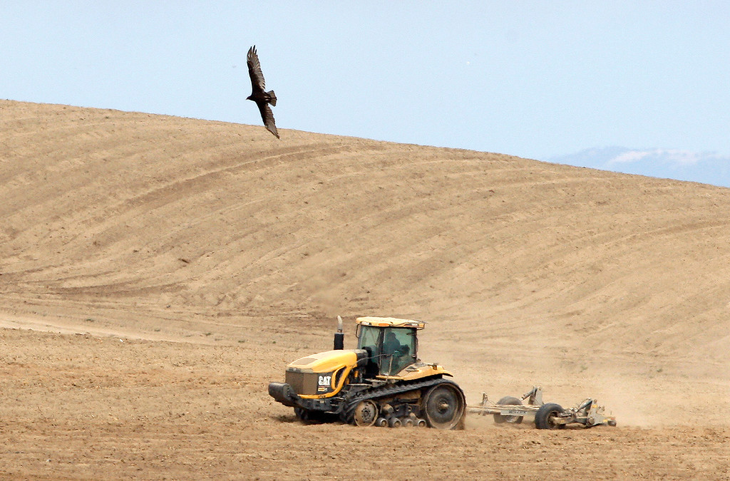 . A tractor plows a field north of Marina as a vulture flies above on Thursday, July 27, 2017.  (Vern Fisher - Monterey Herald)