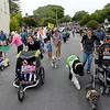 Feast of Lanterns Pet Parade