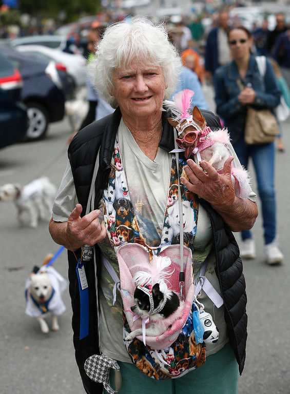. Jeanette Sutton carries her teacup Chihuahuas named Mi Amore, top and Matsu during the Pet Parade in Downtown Pacific Grove, Calif. on Friday July 28, 2017. (David Royal/Herald Correspondent)