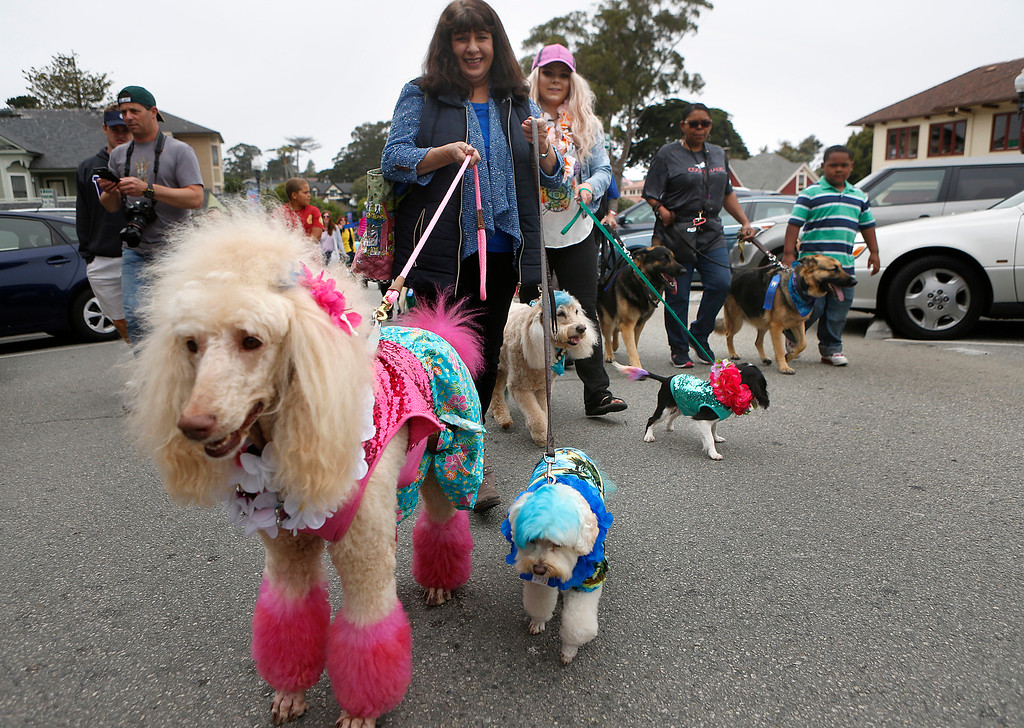 . Pam Henry, center, and fellow pet store worker Lindsey Huffman walk with dogs Cassidy, Dillon, Cisco and Tulula all dressed in beach attire during the Pet Parade in Downtown Pacific Grove, Calif. on Friday July 28, 2017. (David Royal/Herald Correspondent)