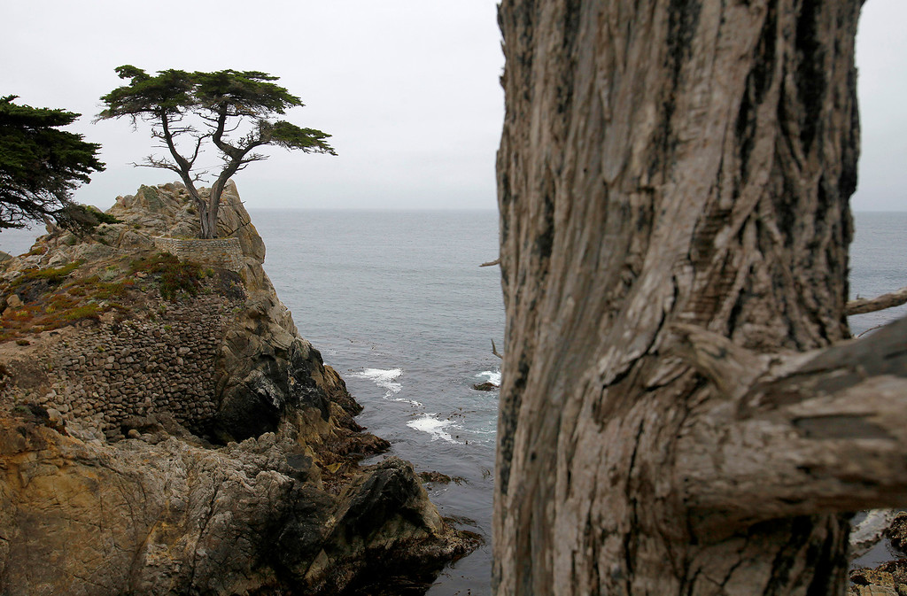 . The Lone Cypress Tree on 17-Mile Drive in Pebble Beach on Wednesday, June 28, 2017.  (Vern Fisher - Monterey Herald)