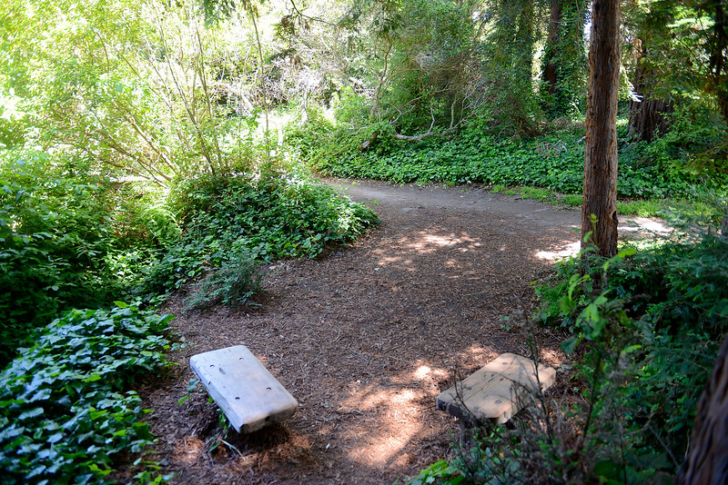 The Frog Pond in Del Rey Oaks
