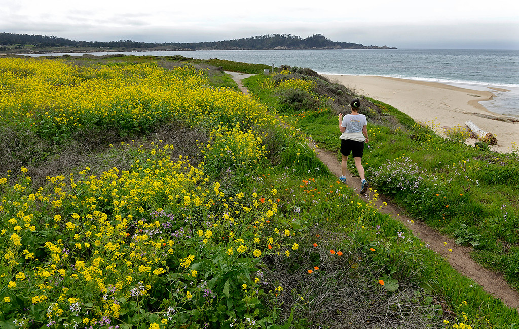 . A woman hiking through Spring wildflowers at Carmel River State Beach on Wednesday, March 21, 2018.  (Vern Fisher - Monterey Herald)