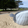 whale play structure
