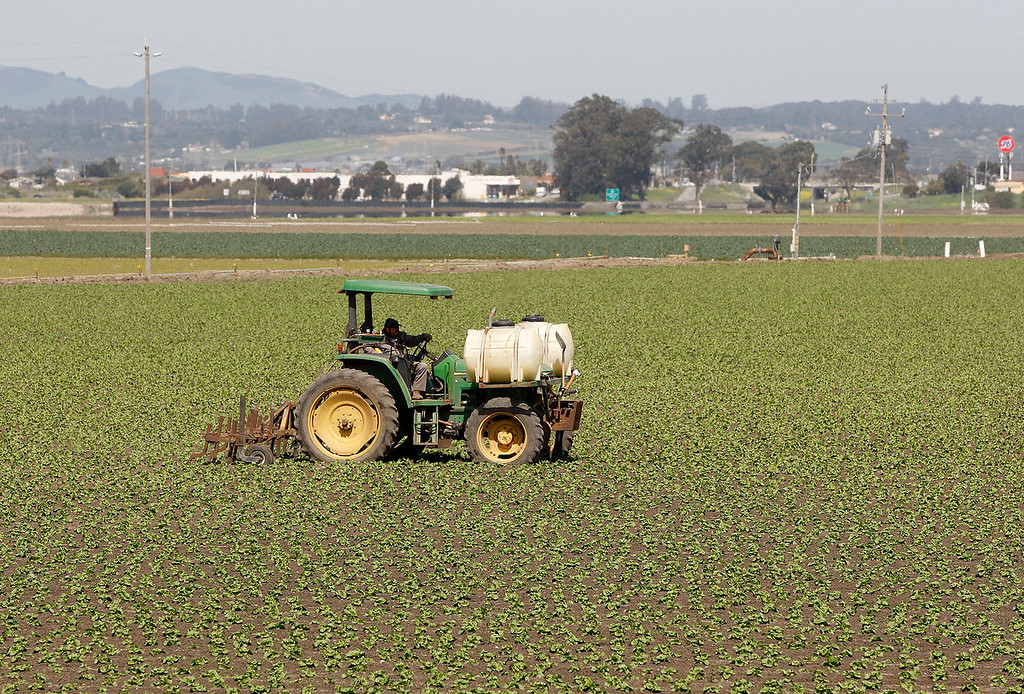 . A farmworker works a field south of Castroville on Friday, March 30, 2018.  (Vern Fisher - Monterey Herald)