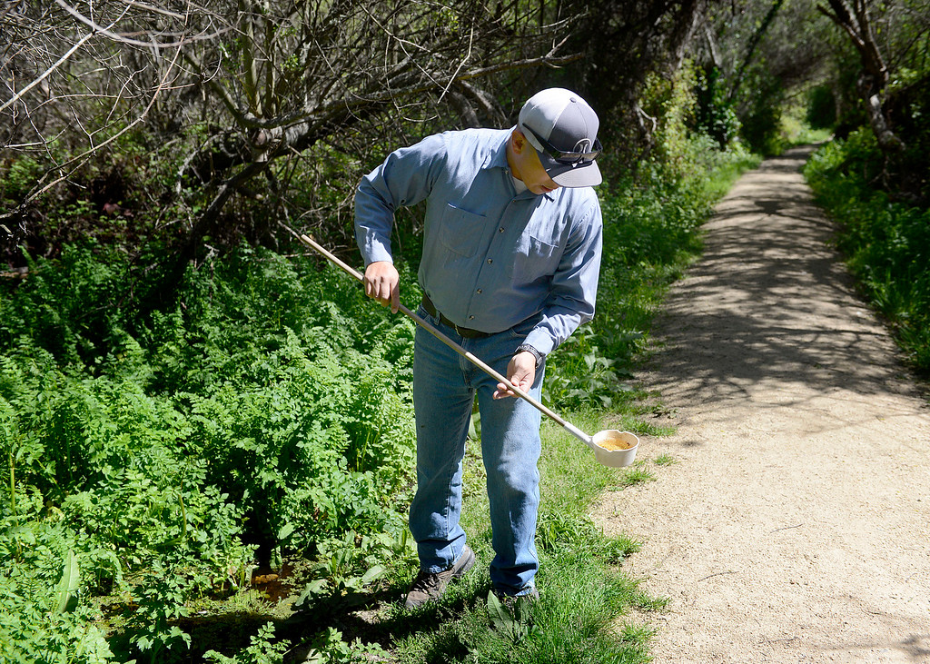 . Northern Salinas Valley Mosquito Abatement District vector control technician Paul Palomo uses a dipper to check for mosquito larvae at the Frog Pond in Del Rey Oaks on Friday March 31, 2017.