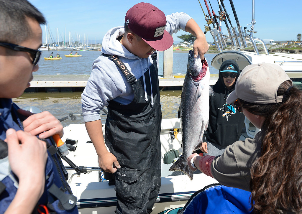. Thanh Dang of San Jose picks up a salmon caught on his boat The Sea Monkey for for California Department of Fish and Wildlife technician Amanda McDermott to see as Dang\'s friends Frank Wong, left, and Theo Ta look on during the opening day of the recreational salmon season at Moss Landing Harbor on Saturday April 1, 2017. (David Royal - Monterey Herald)