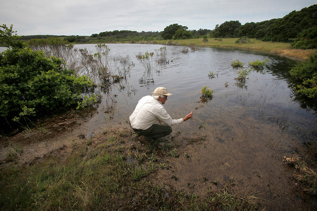 . Bureau of Land Management botanist Bruce Delgado on the banks of a full Machine Gun Lake on the Bureau of Land Management area of Fort Ord on Wednesday, April 5, 2017.  The above average rainfall in Monterey County has filled the approximately forty-five ponds, lakes and vernal pools to full levels.   (Vern Fisher - Monterey Herald)