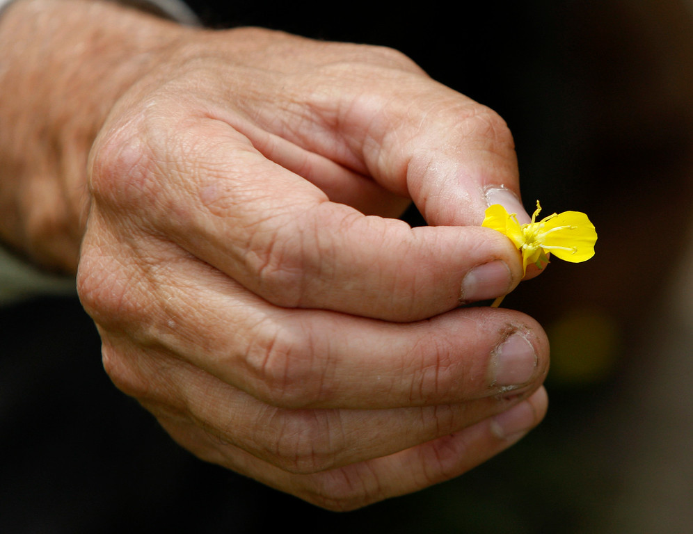 . Bureau of Land Management botanist Bruce Delgado holds a small Buttercup wildflower on the Bureau of Land Management area of Fort Ord on Wednesday, April 5, 2017.  The above average rainfall in Monterey County has filled the approximately forty-five ponds, lakes and vernal pools to full levels.   (Vern Fisher - Monterey Herald)