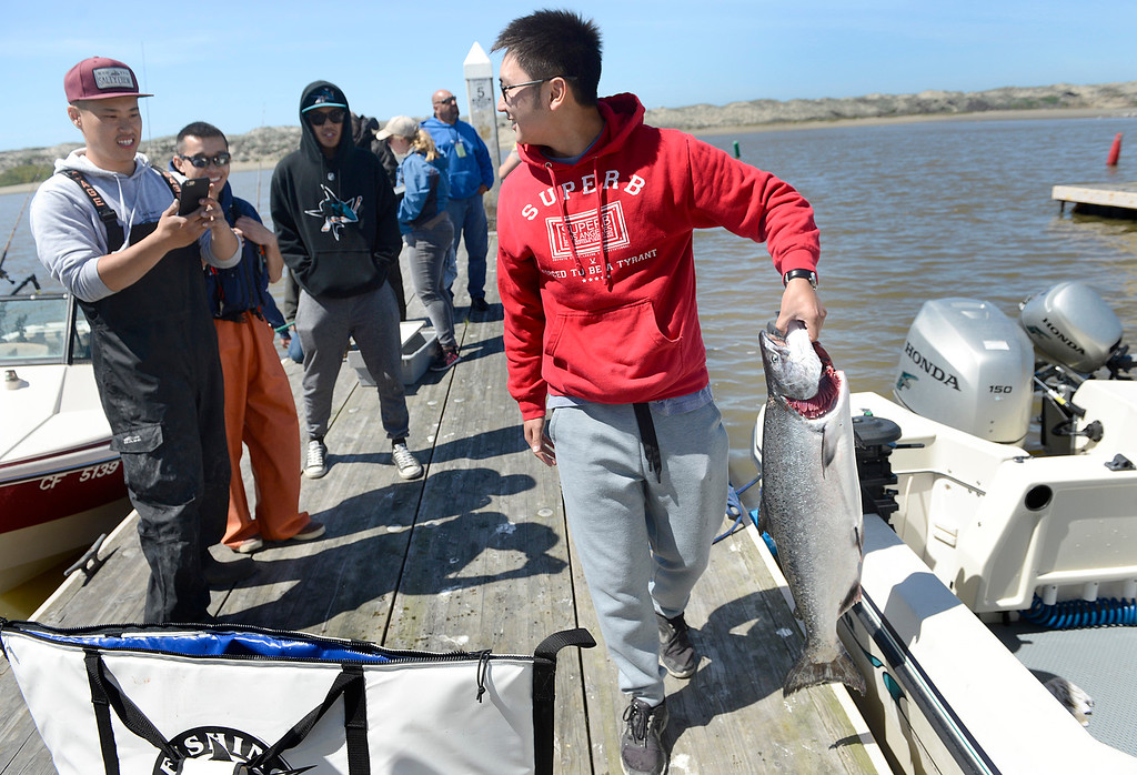 . Hey Nguyen, right, of San Jose picks up the salmon he reeled in as Thanh Dang, left, positions him for a photo as friends Frank Wong, and Theo Ta look on during the opening day of the recreational salmon season at Moss Landing Harbor on Saturday April 1, 2017. (David Royal - Monterey Herald)