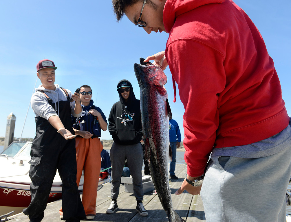 . Hey Nguyen, right, of San Jose picks up the salmon he reeled in as Thanh Dang, left, positions him for a photo as friends Frank Wong, left, and Theo Ta look on during the opening day of the recreational salmon season at Moss Landing Harbor on Saturday April 1, 2017. (David Royal - Monterey Herald)
