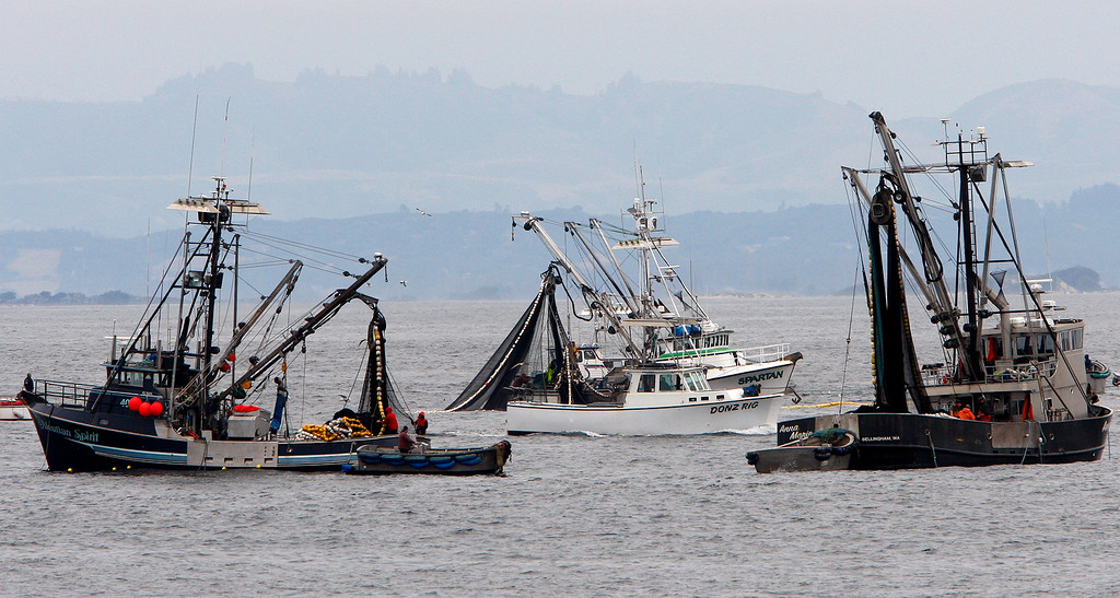 . Commercial fishing boats fish for squid off Lovers Point in Pacific Grove on Monday, May 14, 2018.  (Vern Fisher - Monterey Herald)