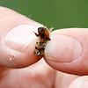 Monterey Herald Bee Removal
