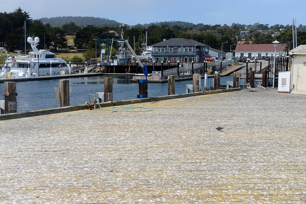 . Looking at the Breakwater Cove Marina from the U.S. Coast Guard Pier in Monterey on Thursday, May 10, 2018.  (Vern Fisher - Monterey Herald)
