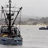 (Vern Fisher - Monterey Herald)