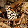 Monarch Butterfly Sanctuary