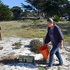 Carmel Beach dune restoration