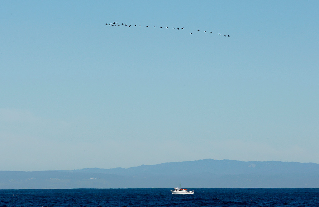 . Migrating Surf Scoter\'s fly over a fishing boat at Point Pinos in Pacific Grove on Wednesday, Nov. 29, 2017.   (Vern Fisher - Monterey Herald)