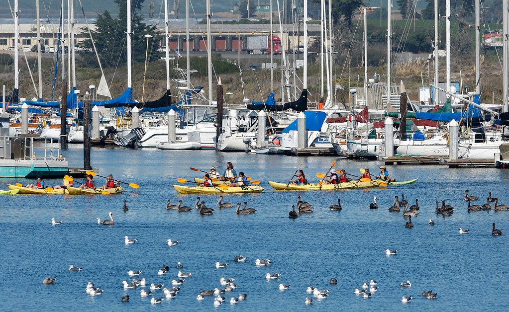 . People kayak past gulls and pelicans in the Moss Landing Harbor on Wednesday, Oct. 25, 2017.  (Vern Fisher - Monterey Herald)