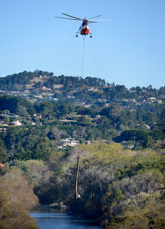 . A helicopter lowers a large log in the Carmel River estuary on Wednesday, Oct. 25, 2017 in an effort to improve fish habitat for the federally protected steelhead trout.  (Vern Fisher - Monterey Herald)