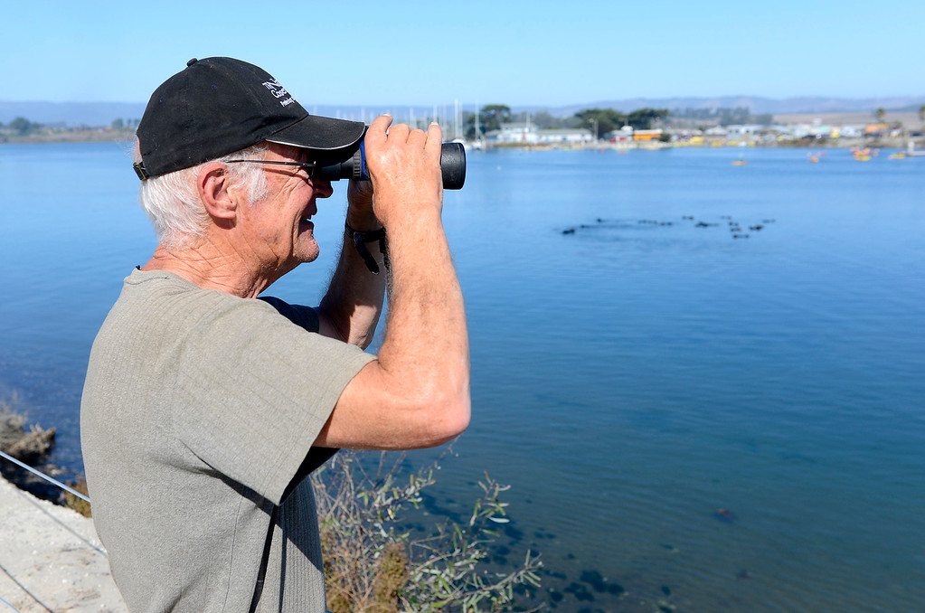 . Citizen scientist Ron Eby at work in the Moss Landing Harbor on Wednesday, Oct. 25, 2017.  (Vern Fisher - Monterey Herald)