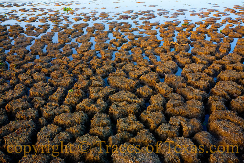 Title: The Edge of Earth<br /> <br /> Comments: Drought times in Texas.<br /> <br /> Location: