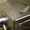 Title:   Bathroom Surprise<br /> <br /> Comments: I was in the bathroom at Mission Tejas State Park when I looked over and there was a frog sitting there atop the electric hand dryer. It was about four feet off the ground. How he got there I will never know.  <br /> <br /> Location:Grapeland, Texas