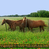 Title:  All the Pretty Horses<br /> <br /> Comments: I took this back when it actually used to rain in these parts.  It's hard to believe it once looked like this, and (hopefully) will one day again.<br /> <br /> Location: Thrall, Texas