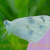 Blue and White on Green and Pink