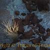 Title:<br /> <br /> Comments:<br /> <br /> Location: Big Bend National Park