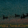 Title:   I SO find an Early Morning Swim to be Refreshing. Don't you, Dear?<br /> <br /> Comments: Only for a moment and the moment's gone.<br /> <br /> Location: On Lake Lady Bird in Austin