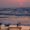 Title:   Another Day, Another Mollusk<br /> <br /> Comments: The aesthetics of sunrises do not impress shorebirds.  <br /> <br /> Location: Port Aransas, Texas