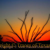 Title:   Ocotillo Pondering the Meaning of Sunset<br /> <br /> Comments: It isn't often that you catch an Ocotillo in deep contemplation, so I was glad to happen upon this one.<br /> <br /> Location:  Lajitas