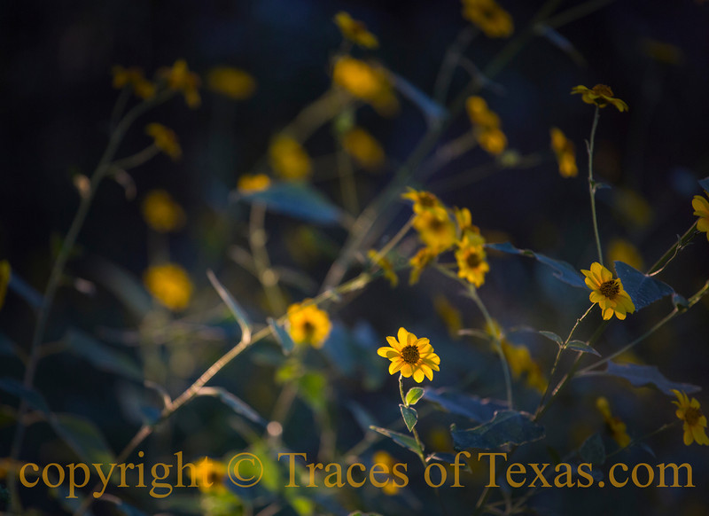 Title:  The Butterfly is a Flying Flower, the Flower a Tethered Butterfly<br /> <br /> Comments:<br /> <br /> Location:  Texas Hill Country