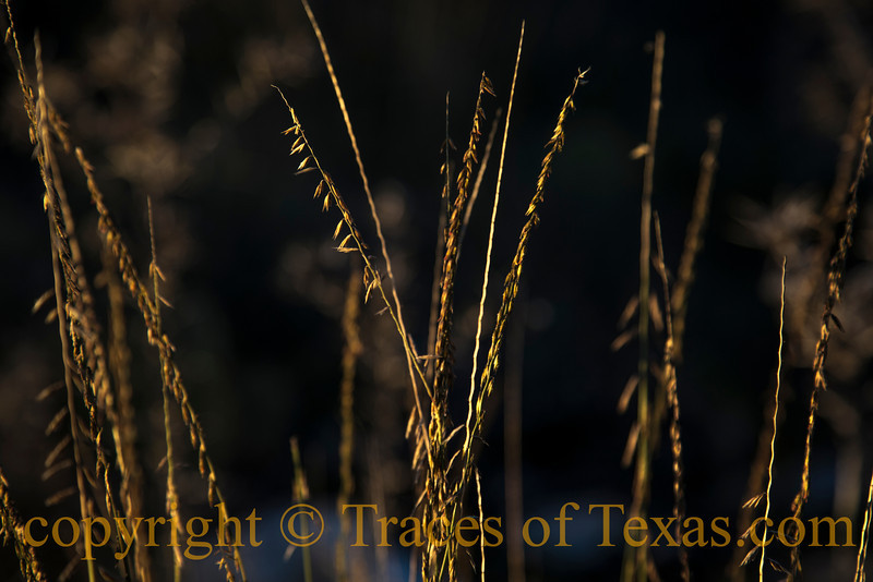 Title:  Dream For Going, Blind Wind Blowing<br /> <br /> Comments: <br /> <br /> Location: The side of any roadway in Texas.