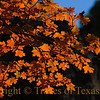 Title: Where the Red Things Are<br /> <br /> Comments: What could be better than McKittrick Canyon in the fall?  I must be livin' right and thinkin' pure thoughts!<br /> <br /> Location: Guadalupe Mountains National Park