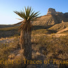 Title: Only Love<br /> <br /> Comments:  <br /> <br /> Only love <br /> Can bring the rain<br /> That makes you yearn to the sky....<br /> <br /> --- The Who<br /> <br /> Location: Guadalupe Mountains National Park