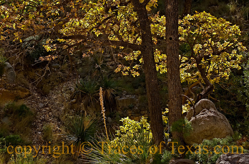 Title:<br /> <br /> Comments:  <br /> <br /> Location: Guadalupe Mountains National Park