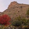 Title: This Tree Wants to Make Love to This Mountain<br /> <br /> Comments: It's true.