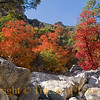 Title: Red Badge of Autumn<br /> <br /> Comments: Would you be foolish enough to disagree with me were I to say that McKittrick Canyon is the most beautiful spot in Texas?<br /> <br /> Location: Guadalupe Mountains National Park