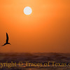 Sunrise Seagul