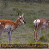 Title:   Where the Deer and the Antelope Play <br /> <br /> Comments: The Chinati Mountains are the great, unknown mountain range of West Texas. <br /> <br /> Location: Chinati Mountains