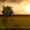 Title:   Life, the Universe, and Mesquite Trees<br /> <br /> Comments: <br /> <br /> Location: Rocksprings