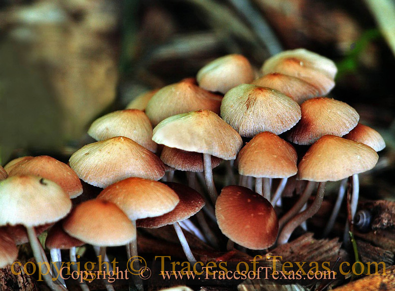 Title:   Woodland Church<br /> <br /> Comments: Fungi congregation<br /> <br /> Location: Hornsby Bend