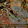 Title:   Leapin' Lizards!<br /> <br /> Comments: I think he was as curious about me as I was about him. <br /> <br /> Location: Black Gap Wildlife Refuge