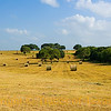Title:  In Floresville's Fields the Haystacks Grow<br /> <br /> Comments:<br /> <br /> Location:
